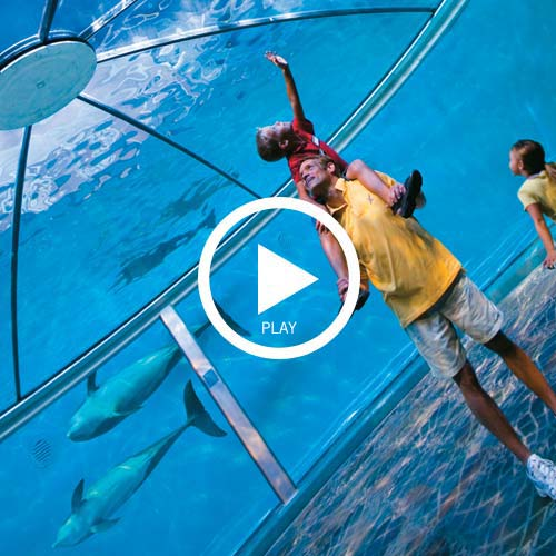 Modern families zoo dolphin videoplay