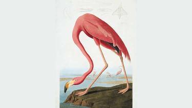 Audubon list