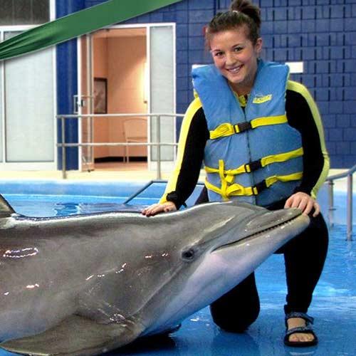 Bucket listers dolphin