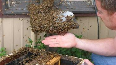 Hunter's Honey Farm