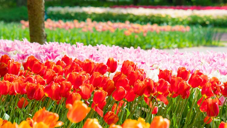 Springblooms03