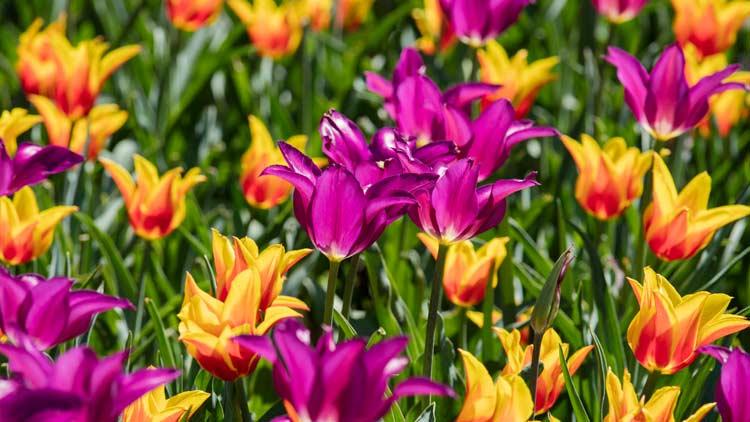 Springblooms06