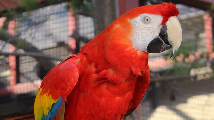 Macaws03