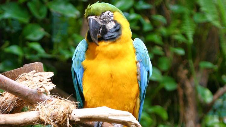 Macaws07