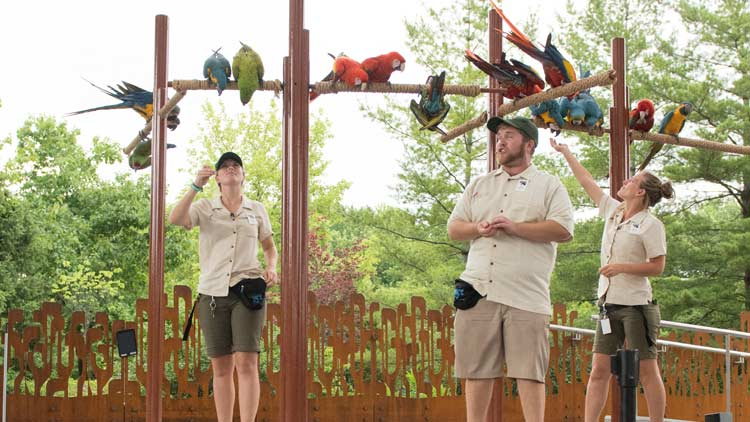 Macaws33
