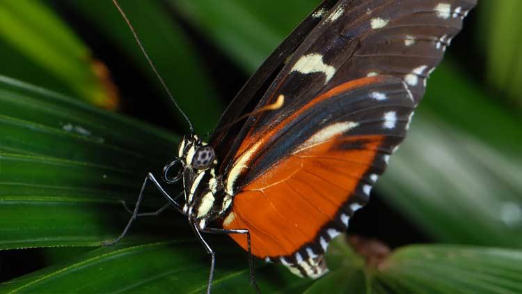 Butterfly Kaleidoscope 5