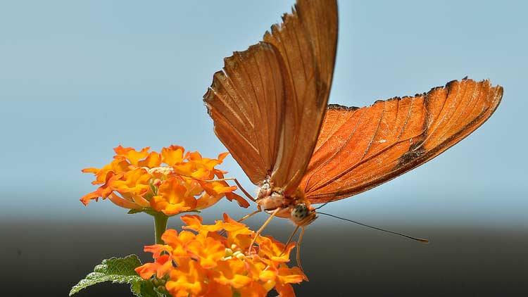 Butterfly Kaleidoscope 8