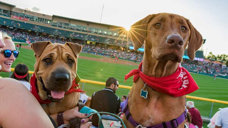 Bark in the Park with the Indianapolis Indians 1