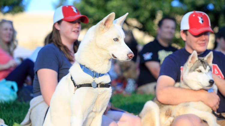 Bark in the Park with the Indianapolis Indians 4