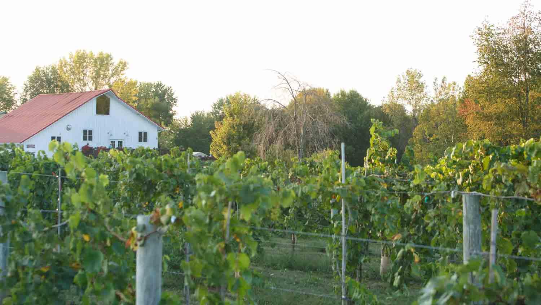 Mallow Run Winery 12