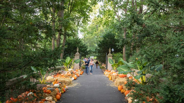 Fall Festivals Guide