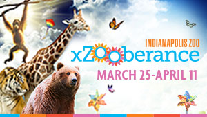 Indy Zoo - Package Web Ad -  022021