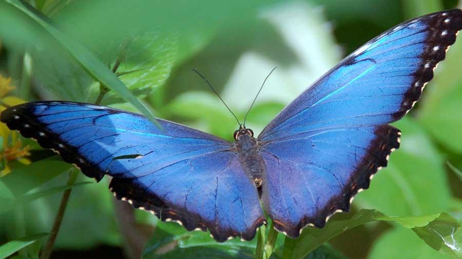 Butterfly Kaleidoscope 14