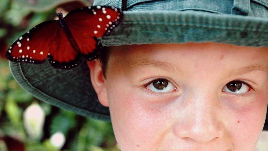 Butterfly Kaleidoscope 20